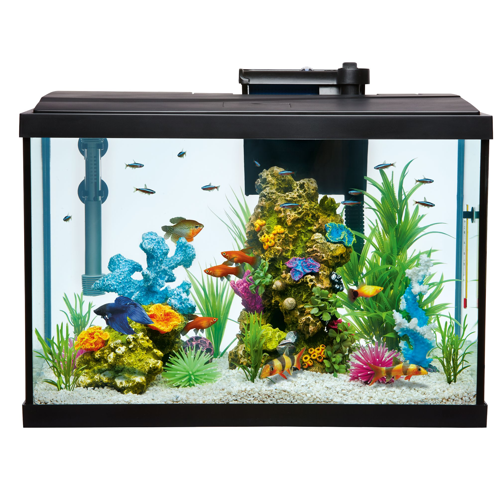 Top Finreg 20 Gallon Aquarium Starter Kit size 20 Gal