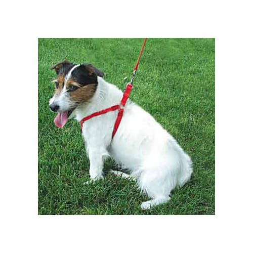 Dickens' Closet Medium Personalized Harness in Red