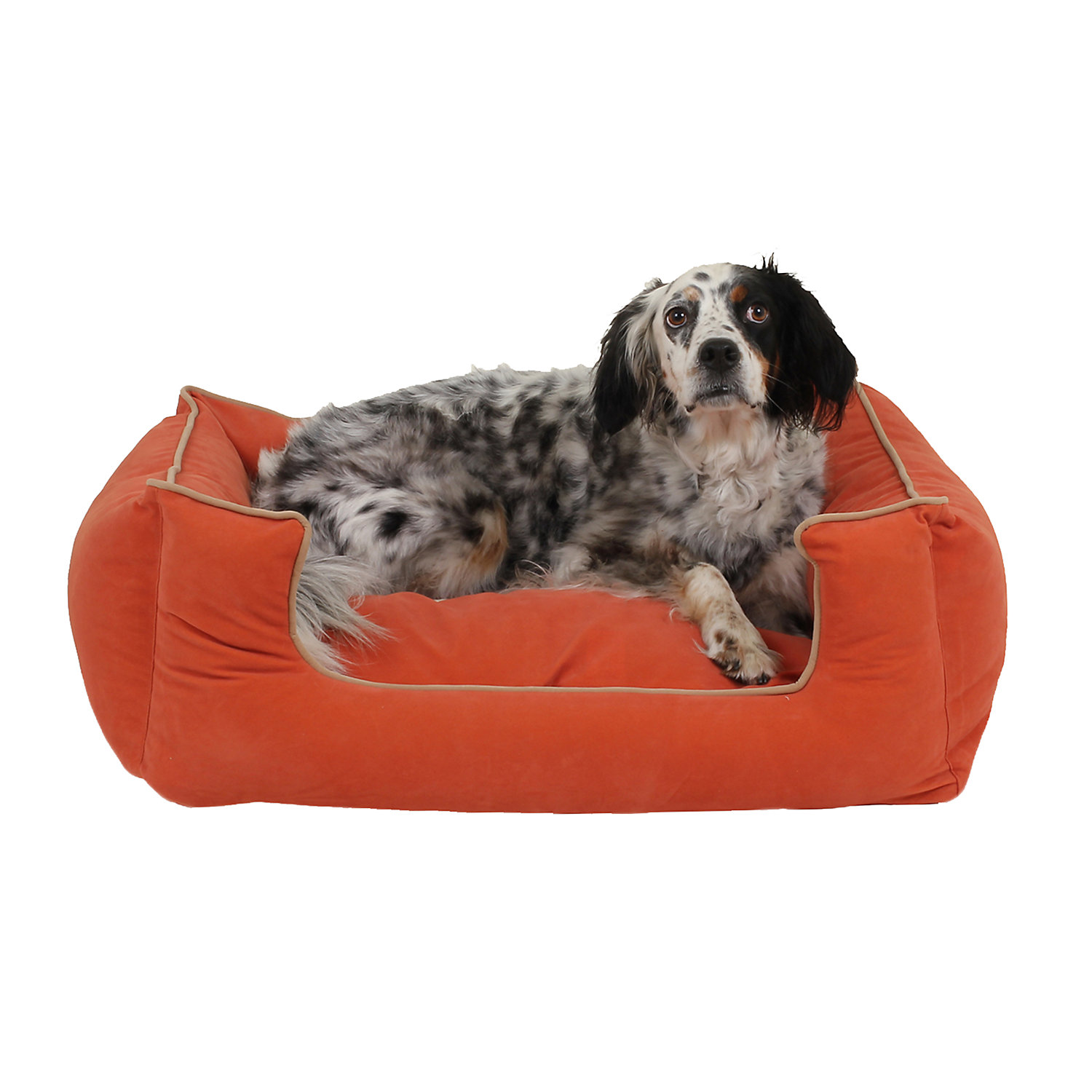 Carolina Pet Kuddle Lounge Low Profile Dog Bed in Apricot with Khaki Cording 30 L x 24 W Small